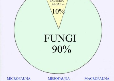 Biomass_distribution_in_forest_soils_FUNGI_equals_90_percent